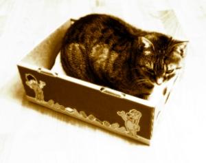 bester schlafplatz gebackene katze vorsicht hei und fettig. Black Bedroom Furniture Sets. Home Design Ideas