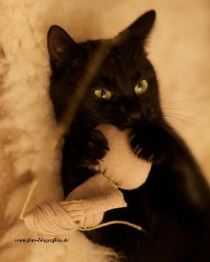 Katzenspielzeug  - Baldrian Stinkestrumpf