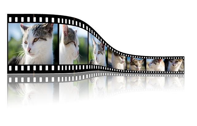Katzen Videos