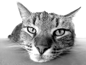 Kostenlos Katzenbilder