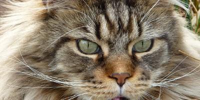 Katze-Kater