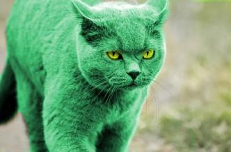Hulk Katze