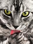 Tag der Katze