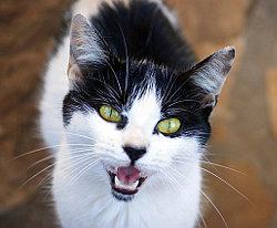 Katzensprache Sprechen Sie Miau Katzenspielzeug Diy