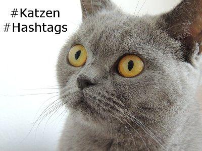 Katzen Hashtags