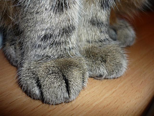 Katzenpfoten