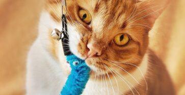 Katzenspielzeug auf Amazon kaufen