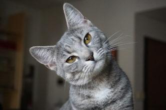 Katzen im Guiness Buch