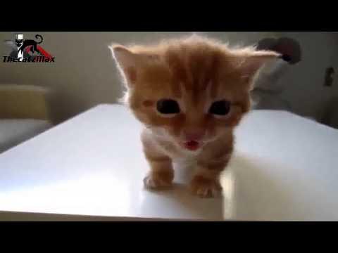 Mieze Katze miaut